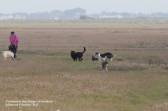 Professional dog-walker on southern salt-marsh October 2012
