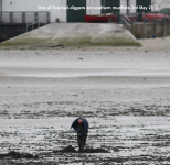 Bait digging southern mudflats